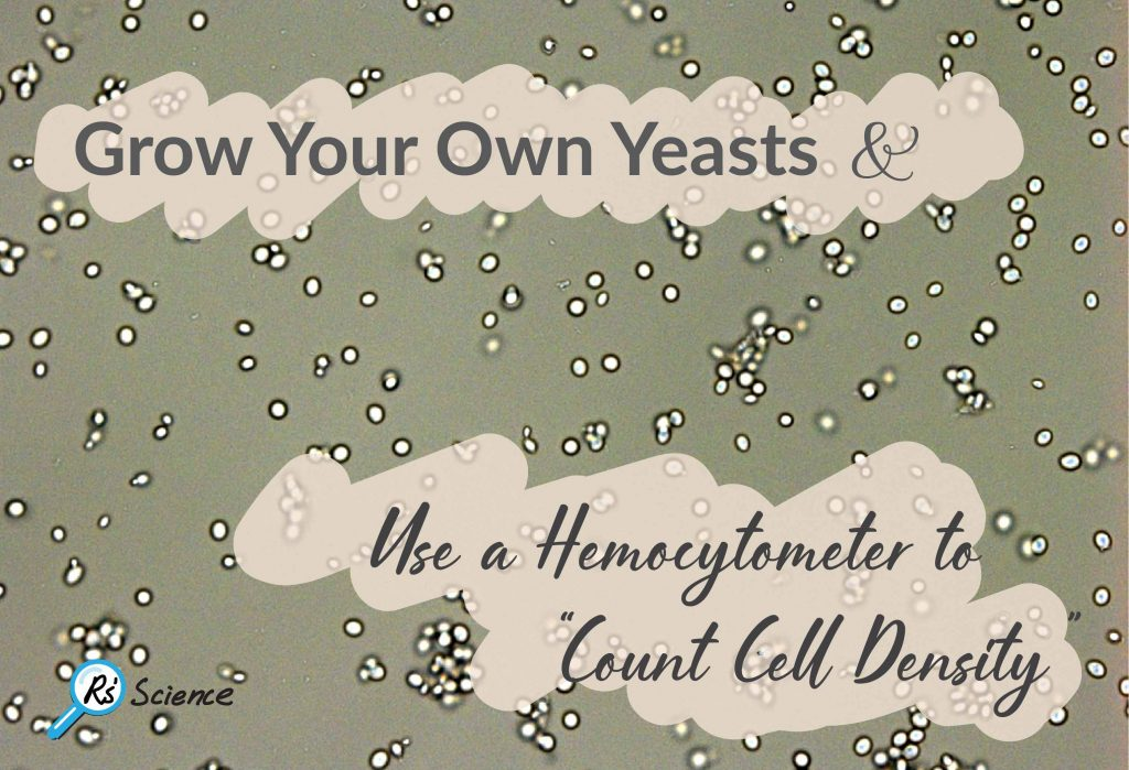 Grow Your Own Yeasts