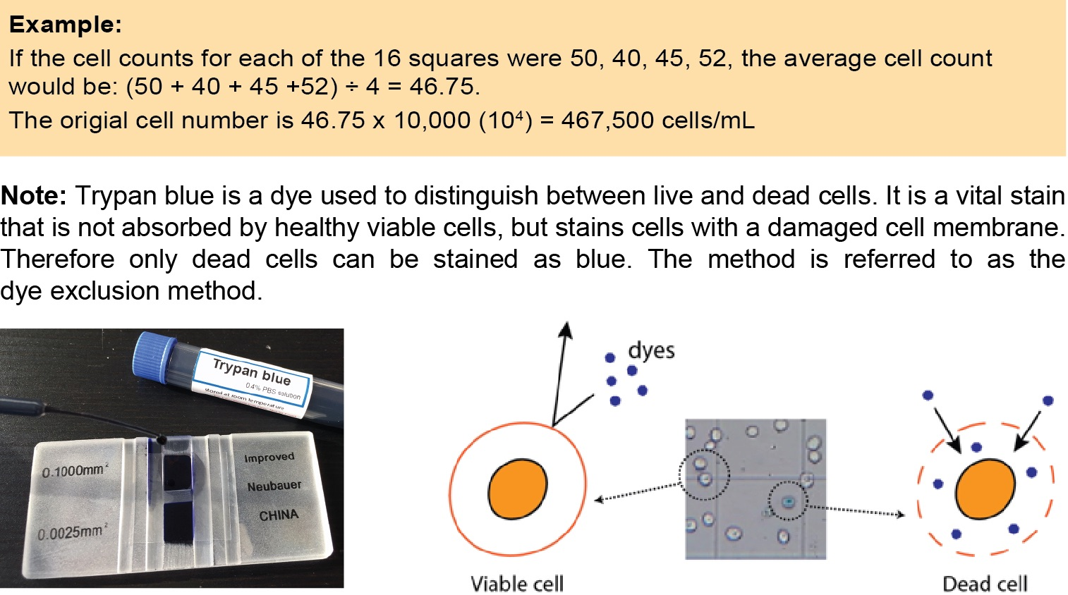 count yeast cell number example