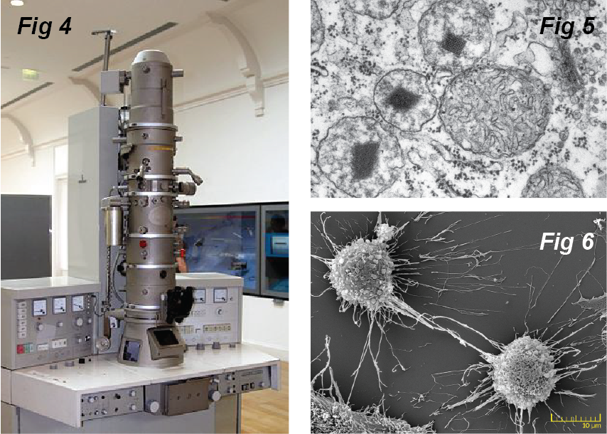 electron microscopic images of cells and organelles