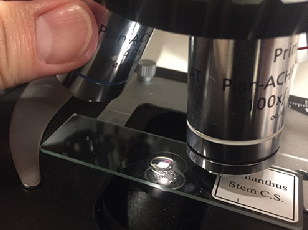 How to use microscope Immersion oil step4