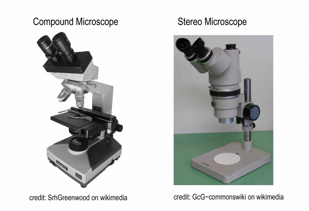 compound_vs_stereo microscope