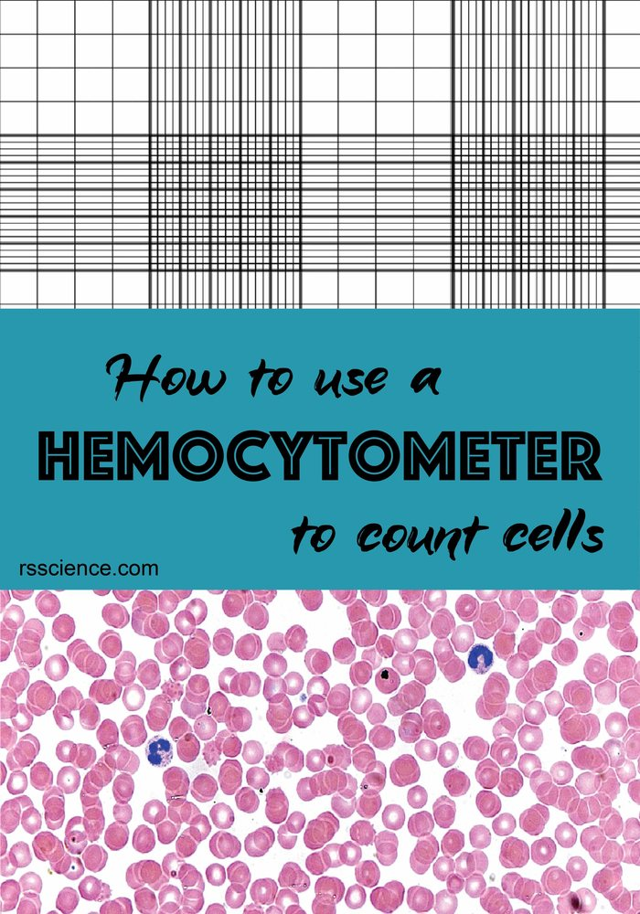 How-to-use-a-hemocytometer-to-count-cells