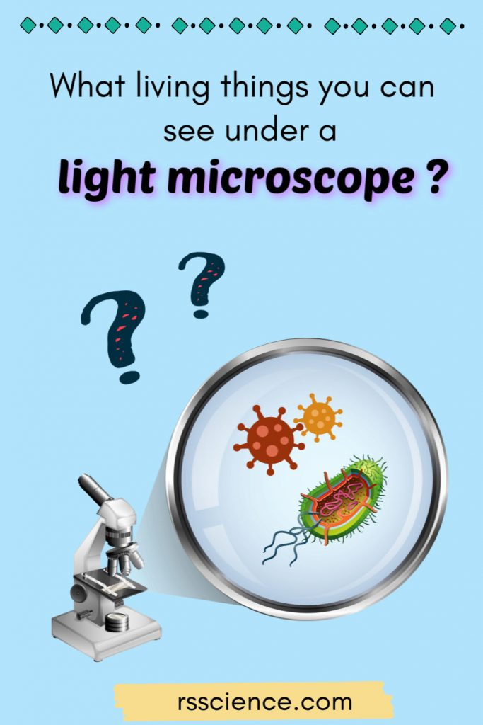 What-living-things-you-can-see-under-a-light-microscope