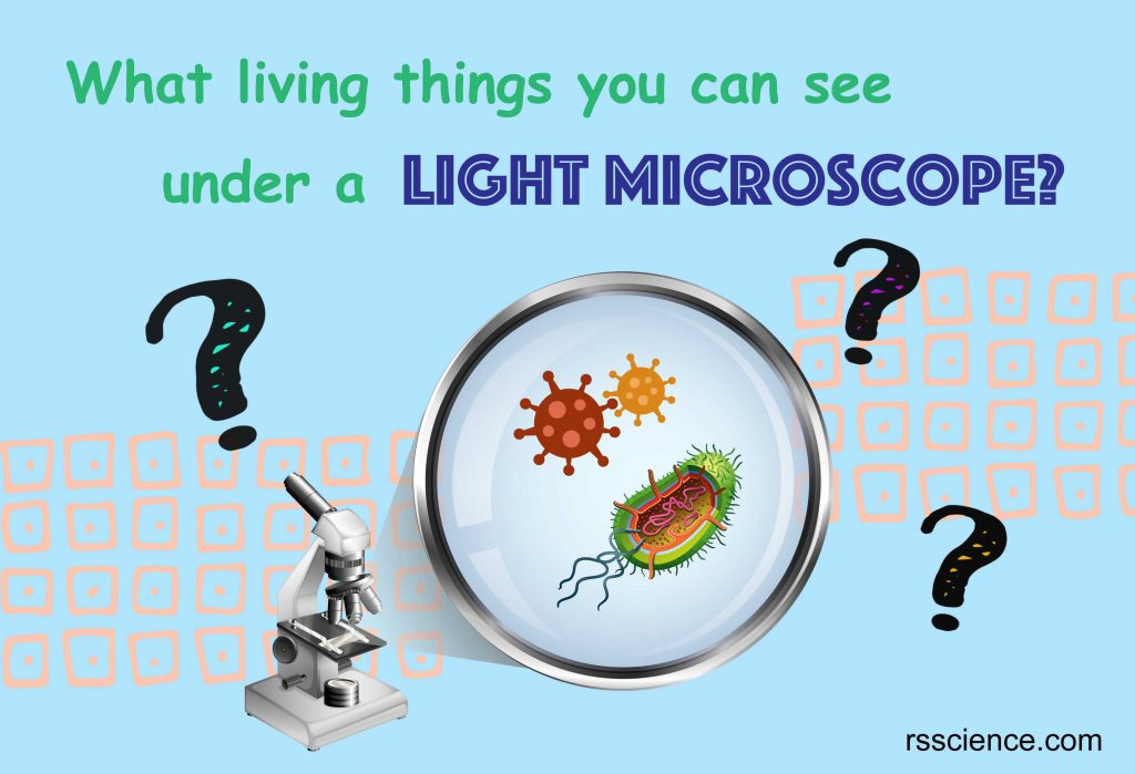 What living things you can see under a light microscope