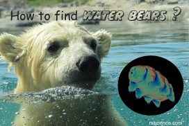 how to find water bear