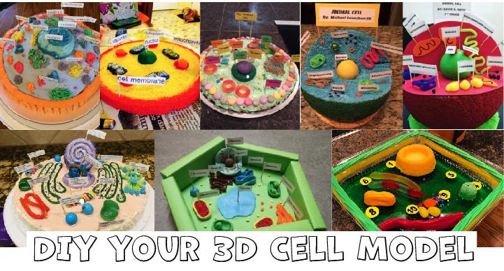 DIY-3D-Cell-Model