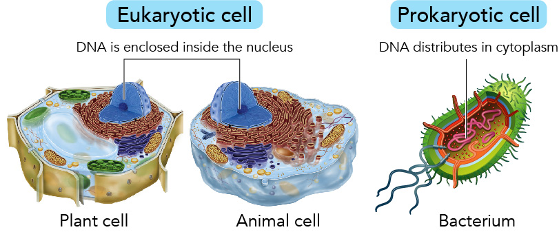Eukaryotic vs Prokaryotic cells