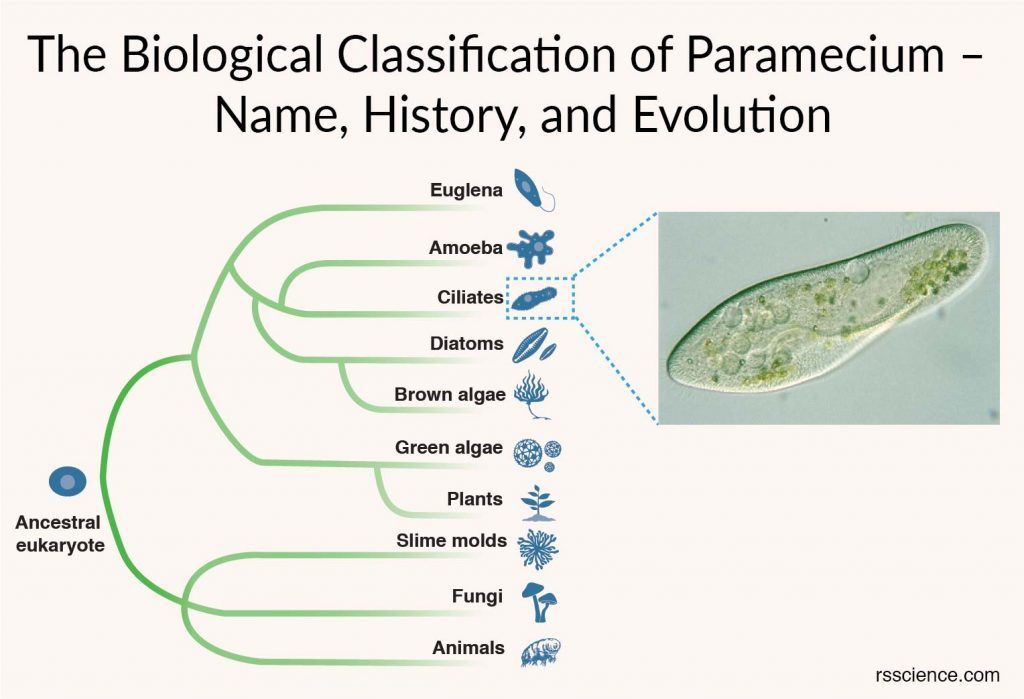 The Biological Classification of Paramecium cover