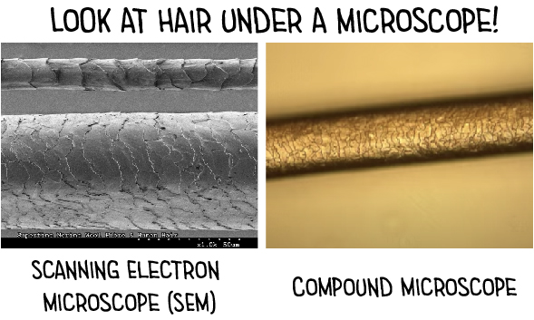 Look-at-hair-under-a-microscope