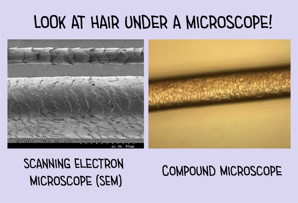 hair under a microscope