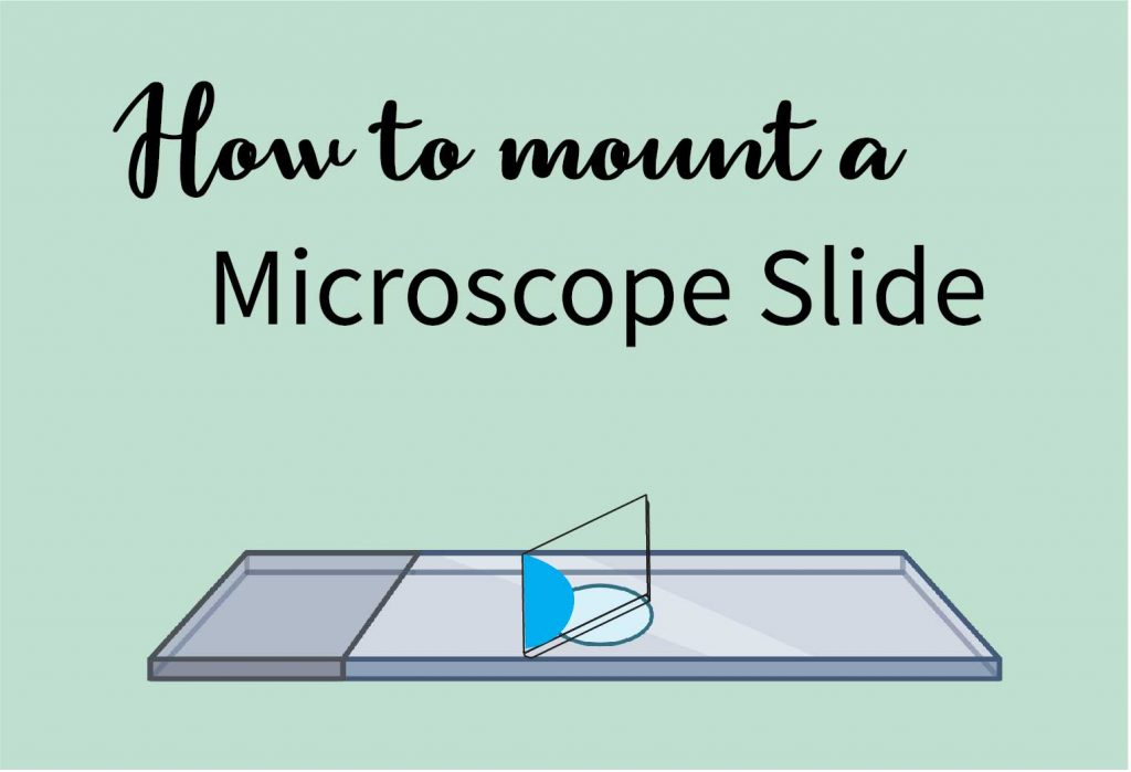 how to mount a microscope slide