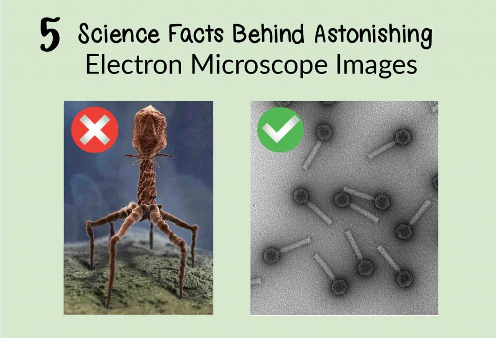 science facts behind astonishing electron microscope images