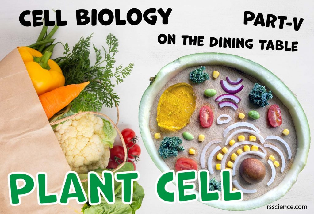 Cell Biology on the dining table Plant cell model