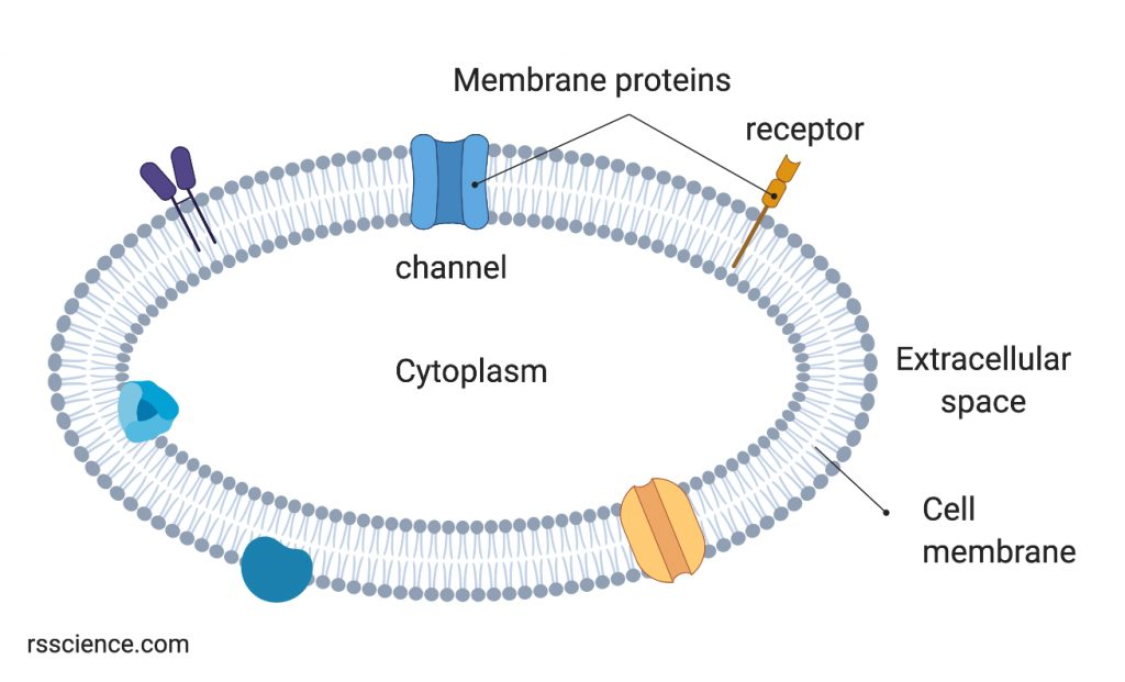 cell-membrane-with-membrane-proteins