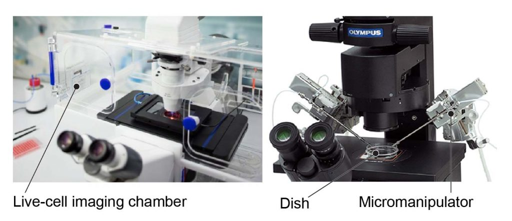 Modified-inverted-microscopes