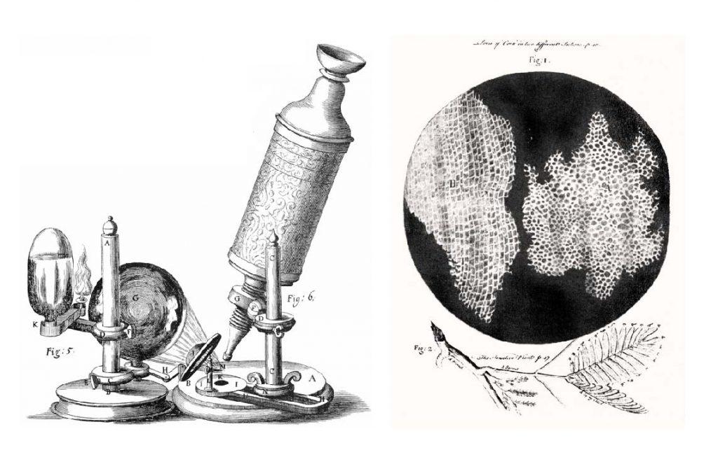 Robert-Hooke-microscope