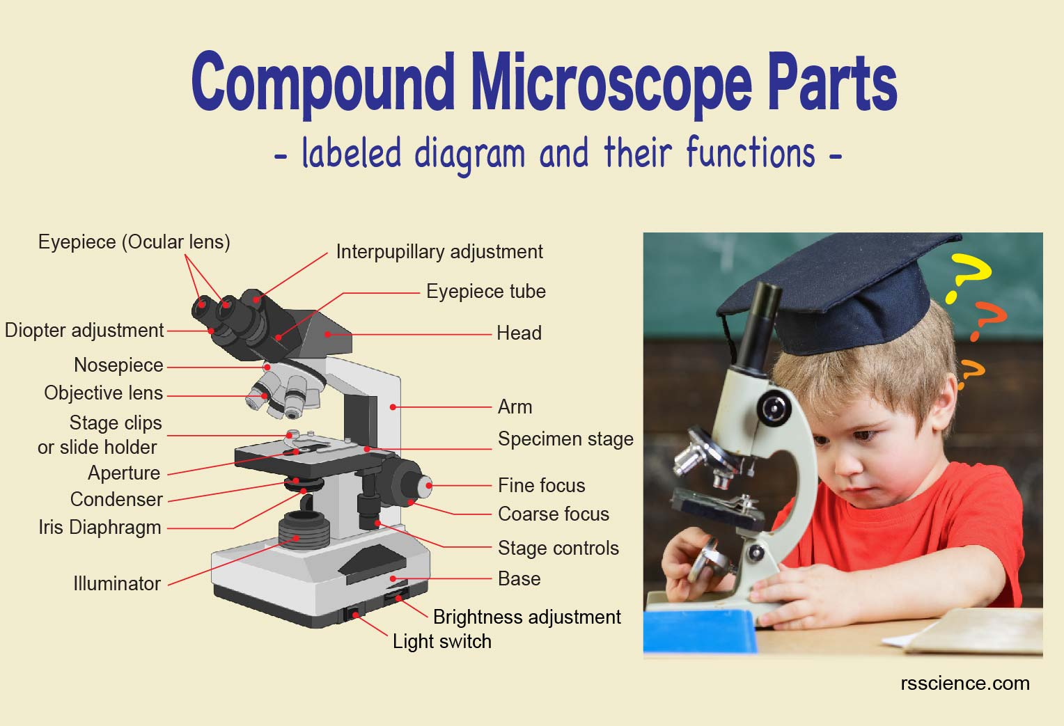 Compound Microscope Parts - Labeled Diagram and their ...