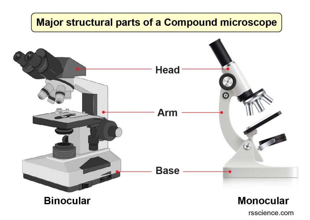 major-structure-part-of-compound-microscope