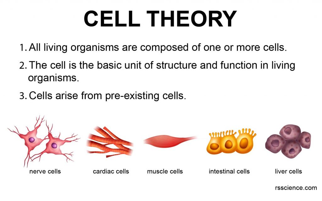 cell-theory