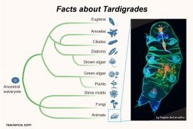 facts about tardigrades