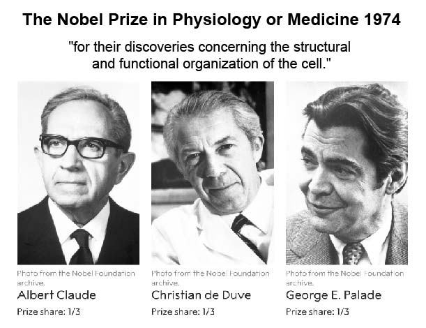 nobel-prize-in-physiology-1974-lysosome