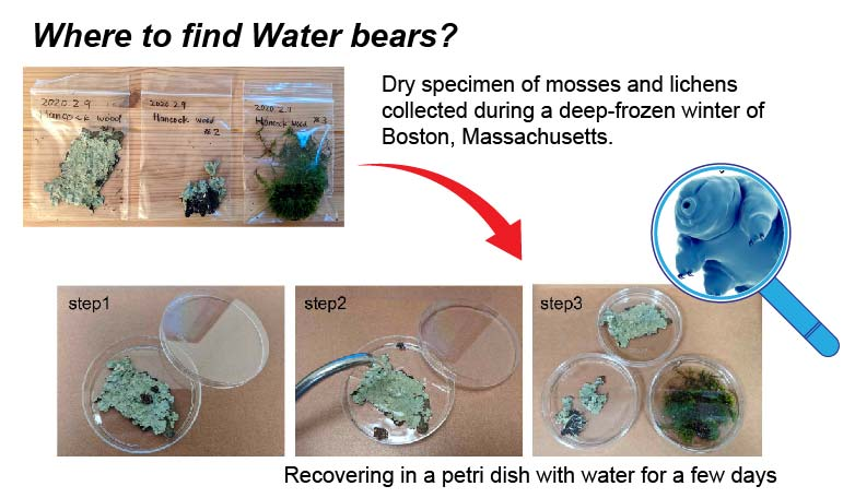 where-to-find-water-bear