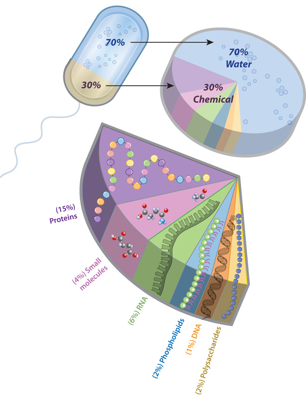 The-composition-of-a-bacterial-cell