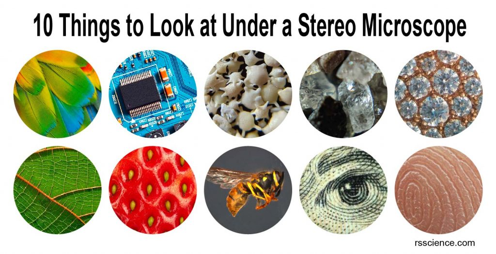 things-to-look-at-under-stereo-microscope