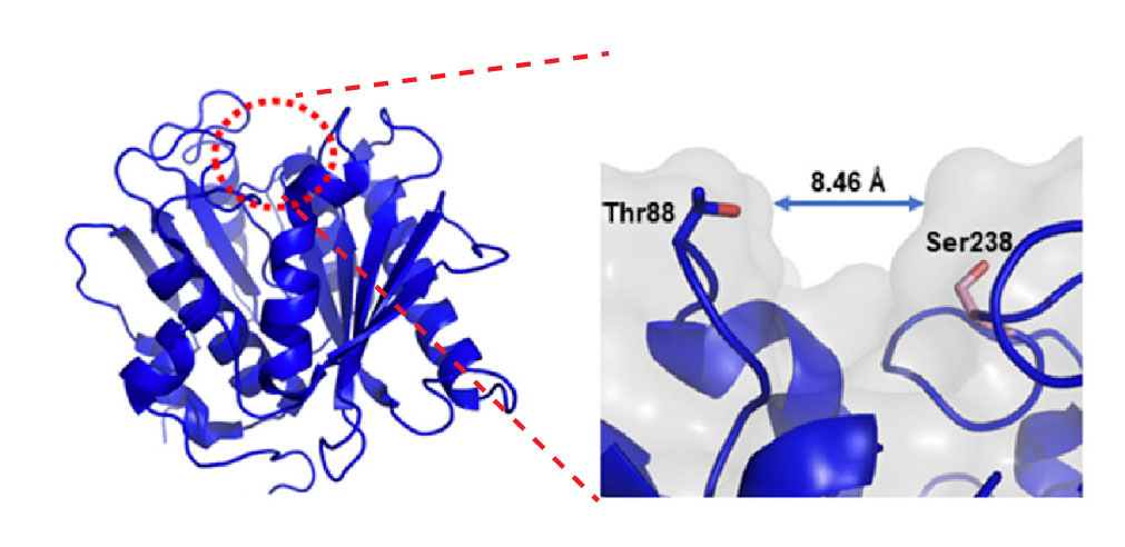 crystal-structure-of-PETase