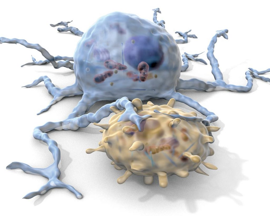 A-dendritic-cell-engages-a-T-cell