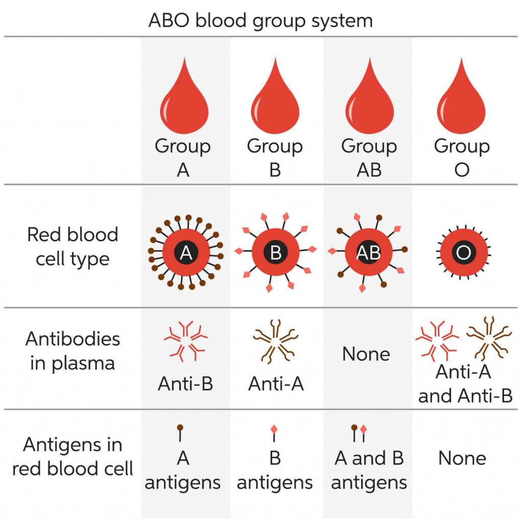 ABO-blood-group