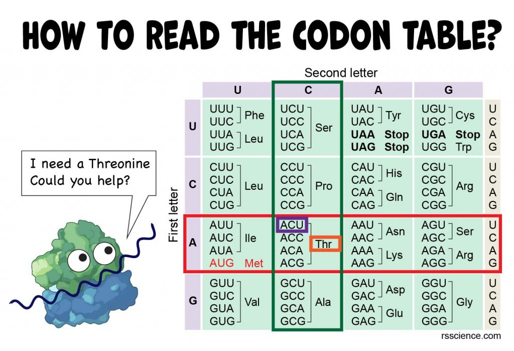how to read the codon table