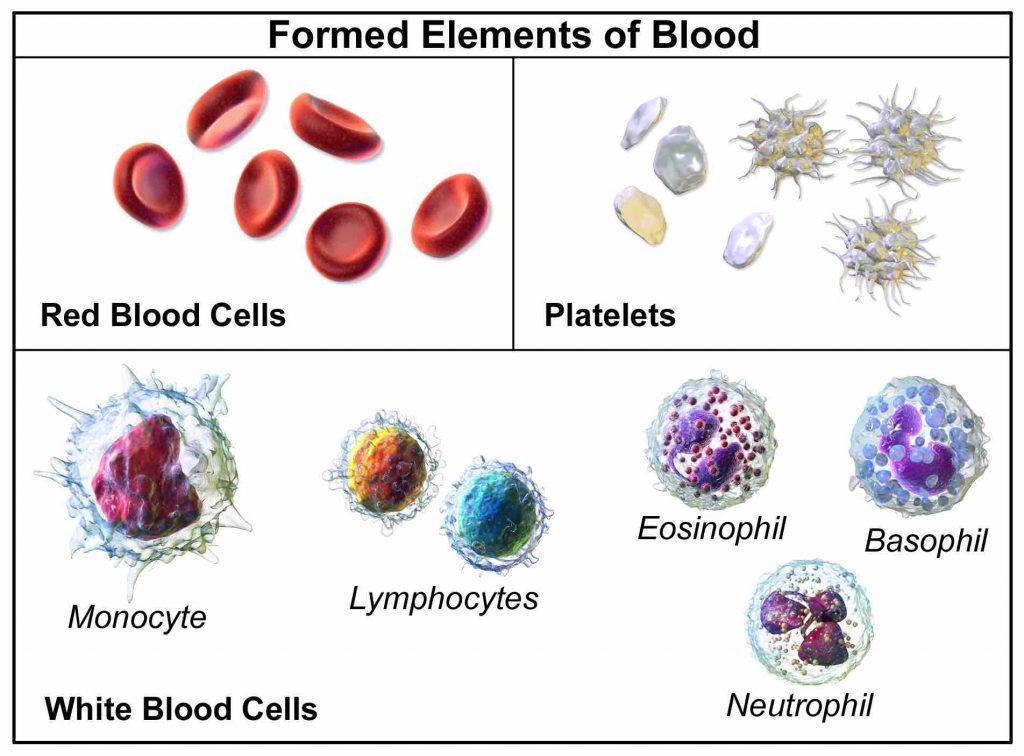 three-major-types-of-blood-cells