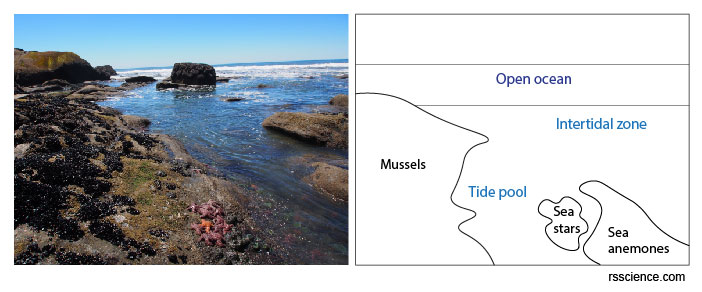 tide-pool-Olympic-National-Park