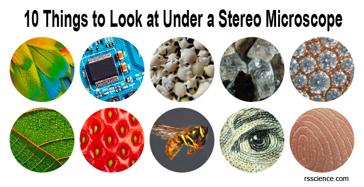 things-to-look-stereo-microscope